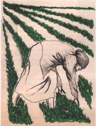 womanfarmworker